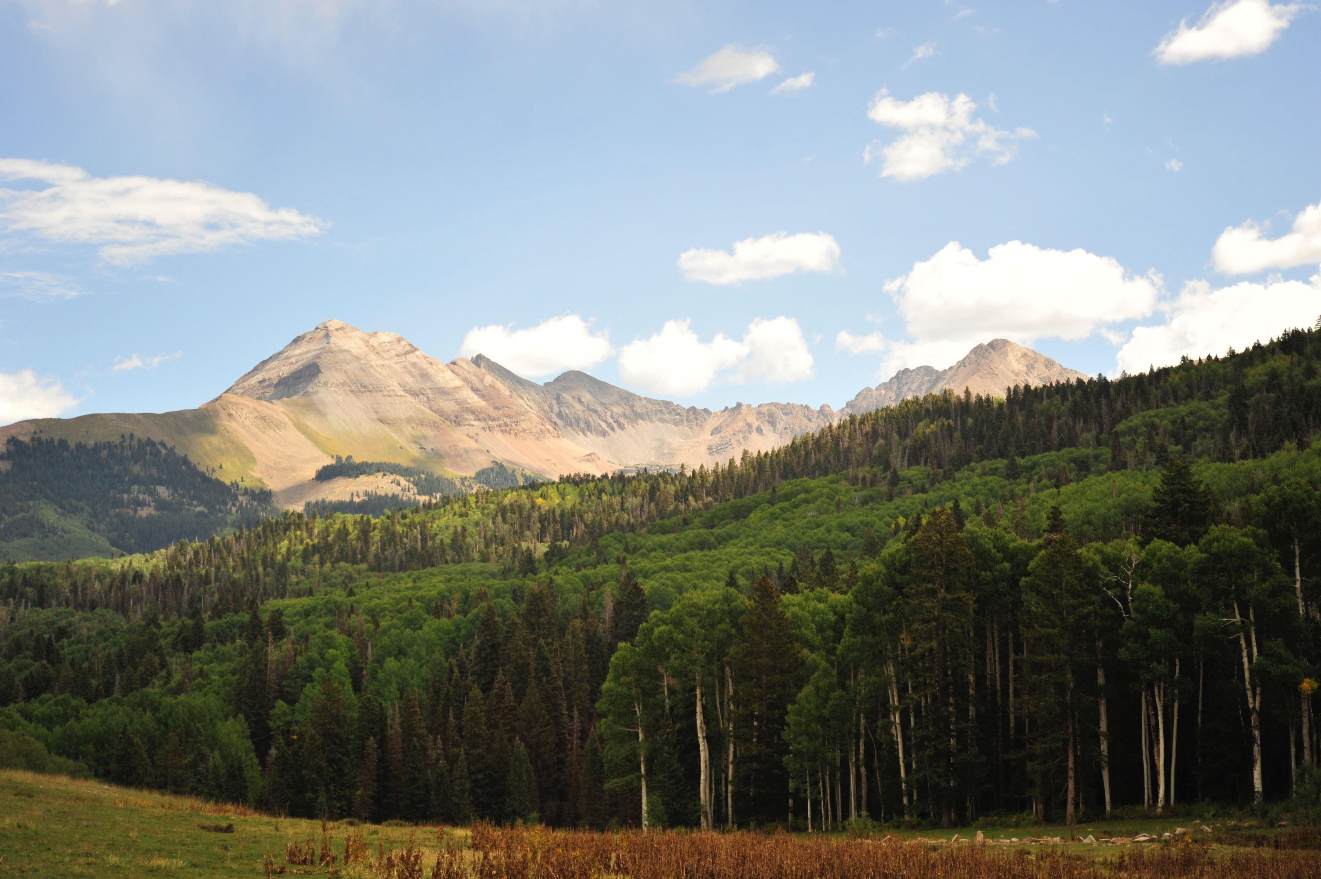 Subalpine forests of the Colorado Rockies are expected to be strongly affected by climate change. Photo courtesy of Lee Anderegg.