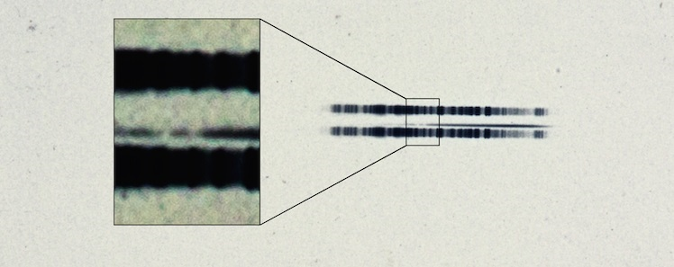 "Caption: The 1917 photographic plate spectrum of van Maanen's star from the Carnegie Observatories' archive. The pull-out box shows the strong lines of the element calcium, which are surprisingly easy to see in the century old spectrum.  The spectrum is the thin, (mostly) dark line in the center of the image. The broad dark lanes above and below are from lamps used to calibrate wavelength, and are contrast-enhanced in the box to highlight the two ""missing"" absorption bands in the star. Available here as a standalone image. Credit: Carnegie Institution for Science."