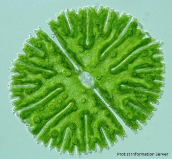 algae the final frontier carnegie institution for science