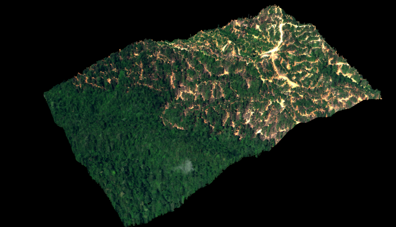 An oblique 3-D view of the rainforest in Sabah. Image is courtesy of the Carnegie Airborne Observatory.