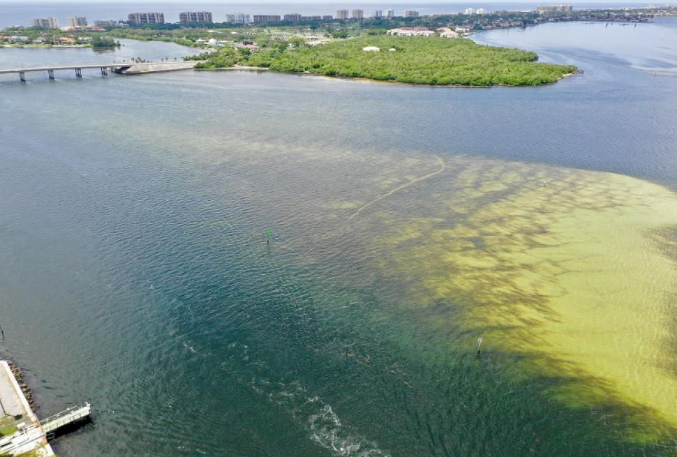 Aerial view of red tide along Florida's gulf coast - summer/fall 2018 by Ryan McGill, purchased form Shutterstock