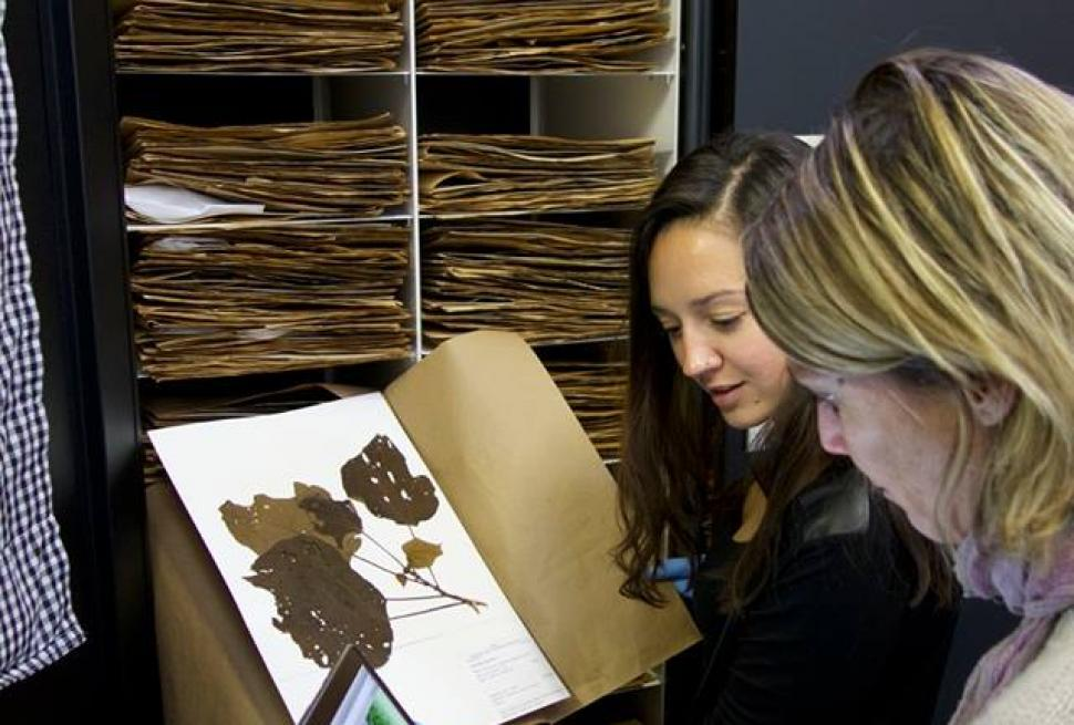 Robin Martin and Katie Kryston search the Spectranomics Library for a species. Photo by Greg Asner.