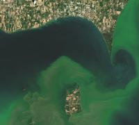 An image of the algal blooms in Lake Erie taken in July 2015. NASA Earth Observatory images by Joshua Stevens, using Landsat data from the U.S. Geological Survey.